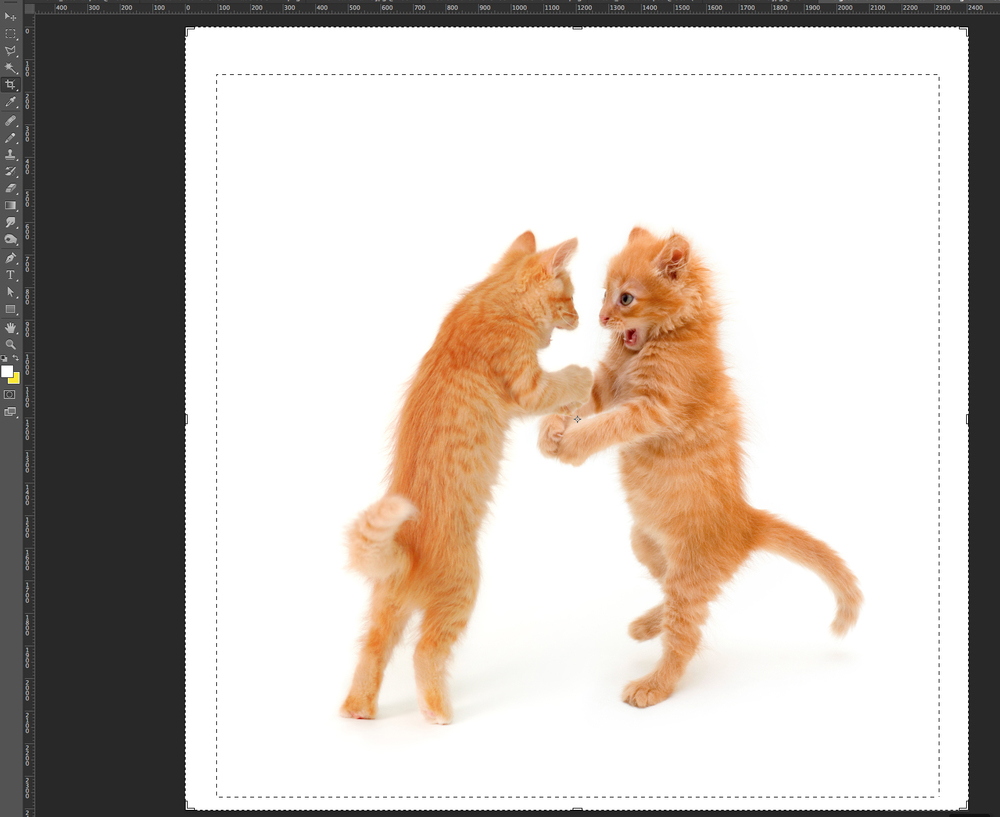 Photoshop basics: How to make a really funny cat meme