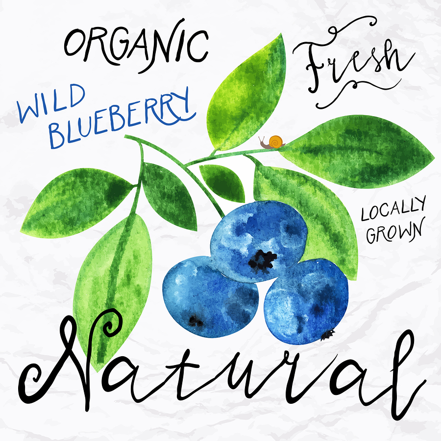 Watercolor blueberry |  tukkki