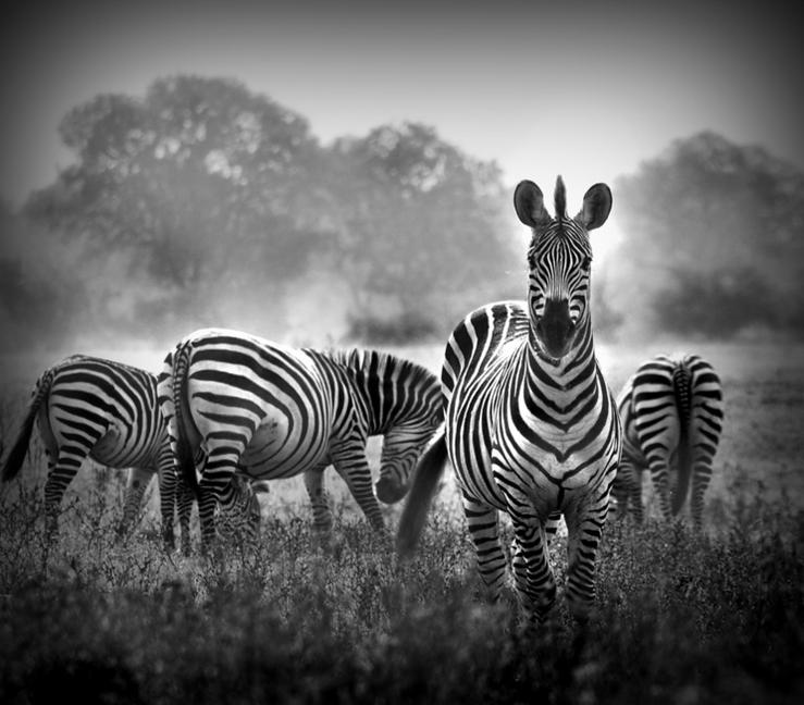 B&W Wildlife Photography from Donovan Van Staden