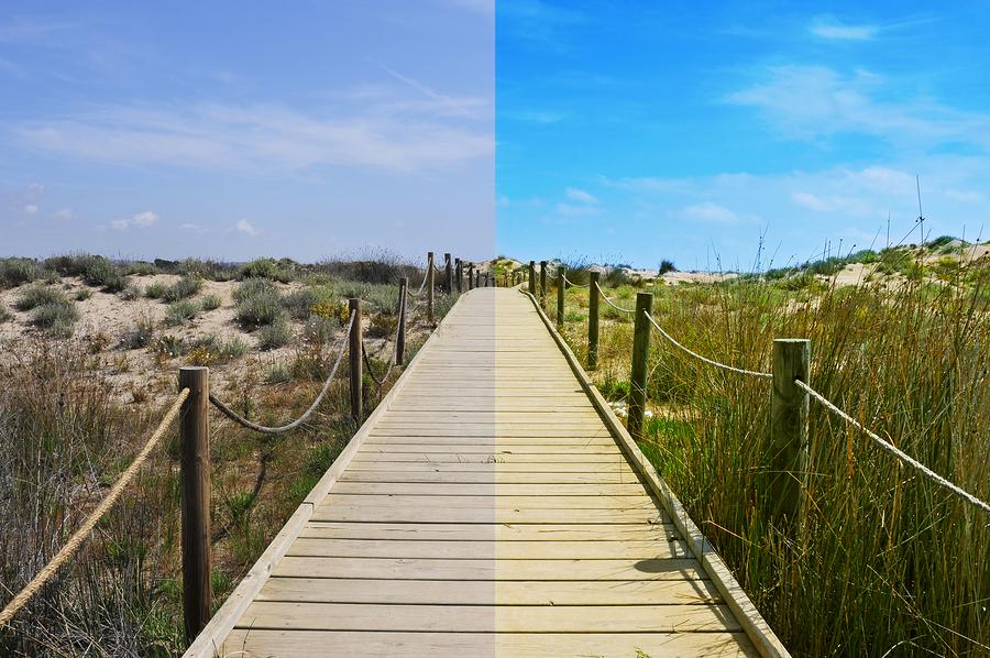 Split boardwalk image    nito
